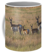 Pronghorn Fawns And Their Mothers Coffee Mug