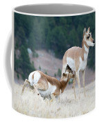 Pronghorn Feeding Coffee Mug