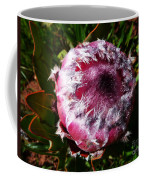 Protea Flower 1 Coffee Mug