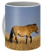 Przewalskis Stallion Coffee Mug