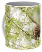 Puffed Up Little Owl In A Willow Tree Coffee Mug