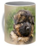 Puppy Portrait II Coffee Mug by Sandy Keeton