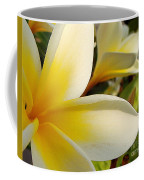 Pure Beauty Plumeria Flowers Coffee Mug