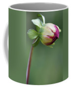 Purple Dahlia Flower Bud Coffee Mug