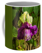 Purple Flower Of The Vine Known As Cathedral Bells Coffee Mug