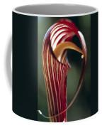 Purple Jack In Pulpit Coffee Mug