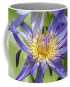 Purple Water Lily Flowers Blooming In Pond Coffee Mug
