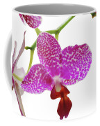 Purple Spotted Orchid On White Coffee Mug