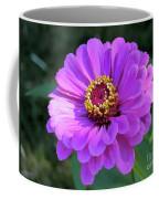 Purple Zinnia  Coffee Mug