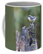 Pygmy Nuthatch Coffee Mug
