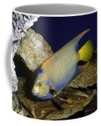 Queen Angelfish Coffee Mug