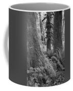 Quinault Rain Forest 3152 Coffee Mug