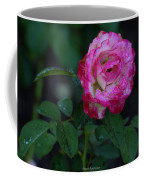 Rain Wet Rose Coffee Mug