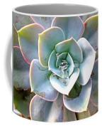 Rainbow Succulent - My Cup Runneth Over Coffee Mug