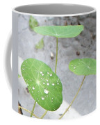 Raindrops On A Nasturtium Leaf Coffee Mug