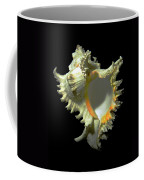 Rams Horn Seashell Murex Ramosus Coffee Mug