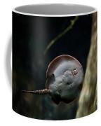Ray Fish Bottom View Coffee Mug