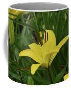 Really Beautiful Yellow Lily Growing In Nature Coffee Mug