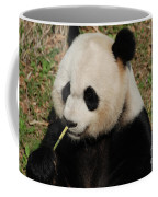 Really Cute Giant Panda Bear With Bamboo Coffee Mug