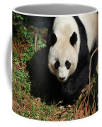 Really Sweet Giant Panda Bear Waddling Around Coffee Mug