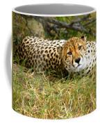 Reclining Cheetah Coffee Mug