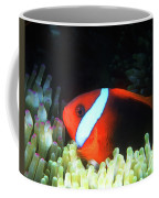 Red And Black Anemonefish, Great Barrier Reef Coffee Mug