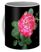 Red And White Rose In Rain Coffee Mug