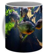 Red Bellied Piranha Or Red Piranha Coffee Mug