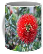 Red Bottlebrush Coffee Mug