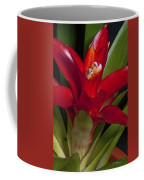 Red Bromiliad Coffee Mug