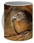 Red-chested Button-quail Coffee Mug
