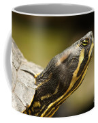 Red-eared Slider Coffee Mug