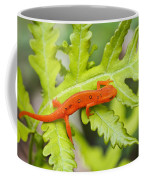 Red Eft Eastern Newt Coffee Mug