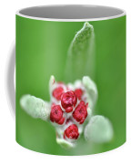 Red Everlasting At Amatzia Forest -1 Coffee Mug