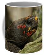 Red-footed Tortoise Coffee Mug