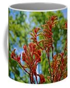 Red Kangaroo Paws At Pilgrim Place In Claremont-california- Coffee Mug