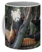 Red Panda Cubs At Play Coffee Mug