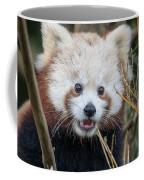 Red Panda Wonder Coffee Mug