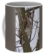 Red Shouldered Hawk - Madison - Wisconsin Coffee Mug