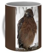 Red Shouldered Hawk Portrait Coffee Mug