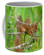 Red Squirrel In The Cherry Tree Coffee Mug