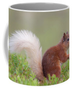 Red Squirrel Pauses Coffee Mug