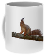 Red Squirrel Transparent Coffee Mug