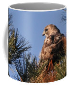 Red Tail In The Pines Coffee Mug