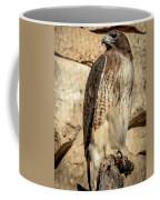 Red-tailed Hawk 4 Coffee Mug