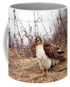 Red Tailed Hawk In The Field Coffee Mug