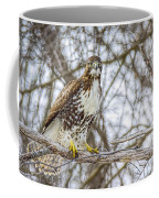 Red Tailed Hawk,  Coffee Mug