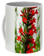 Red Texas Plume Flowers Coffee Mug