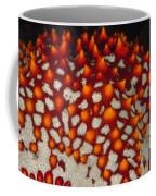 Red Thorns Of A Sea Star, Pentaceraster Coffee Mug