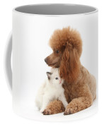 Red Toy Poodle And Kitten Coffee Mug
